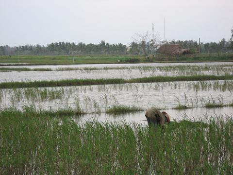 vietnam-sequia.jpg