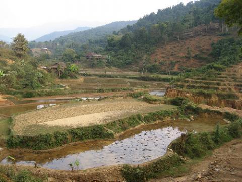 campo-arroz-vietnam.jpg