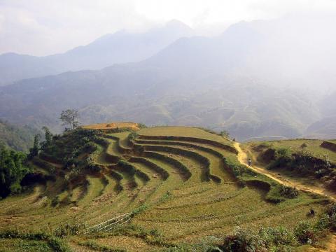 cultivo-arroz.jpg